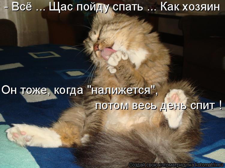 """Котоматрица: - Всё ... Щас пойду спать ... Как хозяин  Он тоже, когда """"налижется"""", потом весь день спит !"""