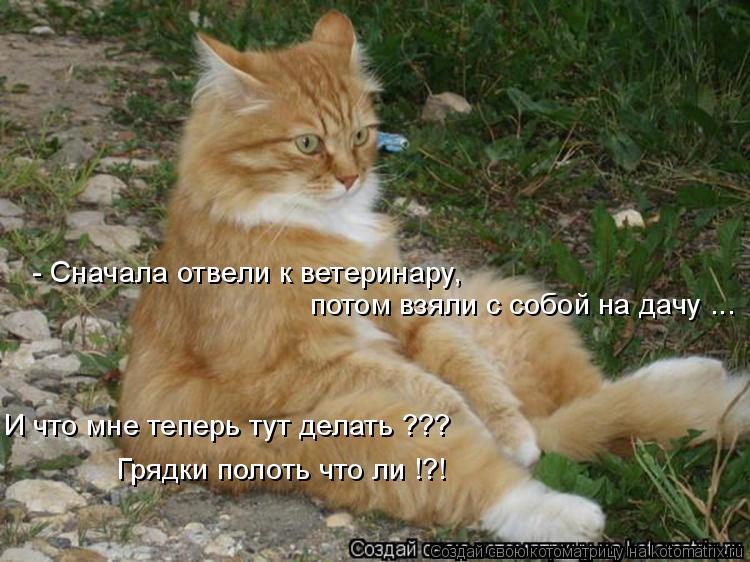Котоматрица: - Сначала отвели к ветеринару, потом взяли с собой на дачу ... И что мне теперь тут делать ??? Грядки полоть что ли !?!