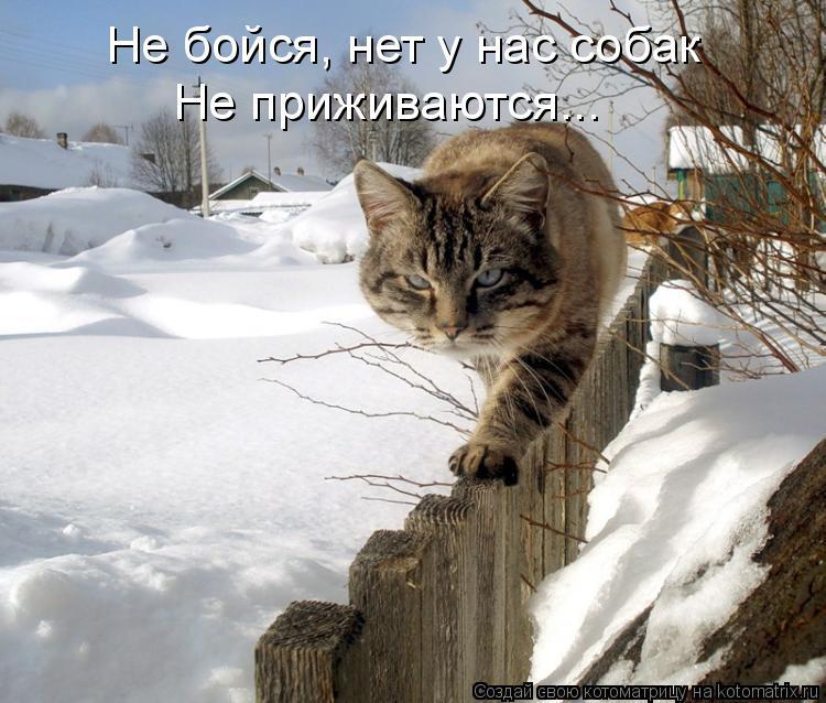 Котоматрица: Не бойся, нет у нас собак Не приживаются...