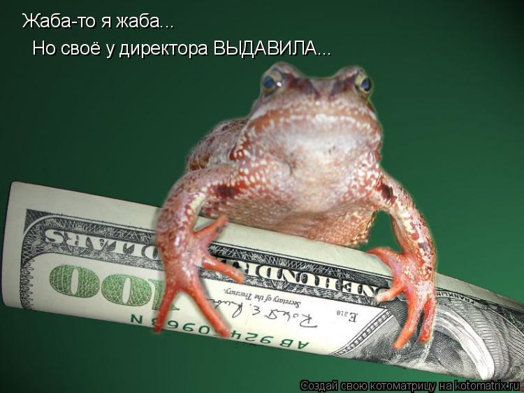 Котоматрица: Жаба-то я жаба... Но своё у директора ВЫДАВИЛА...