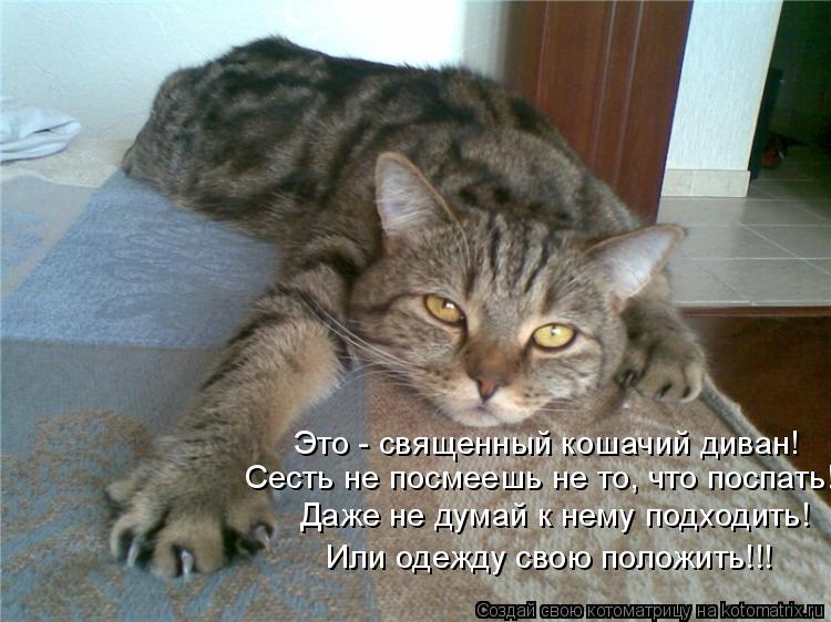 Котоматрица - Это - священный кошачий диван! Сесть не посмеешь не то, что поспать! Д