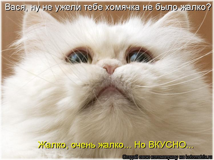 Котоматрица: Жалко, очень жалко... Но ВКУСНО... Вася, ну не ужели тебе хомячка не было жалко?