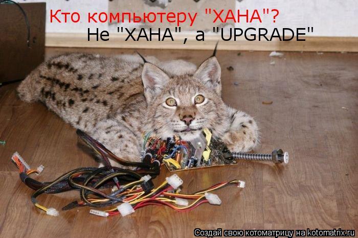 """Котоматрица: Кто компьютеру """"ХАНА""""? Не """"ХАНА"""", а """"UPGRADE"""""""