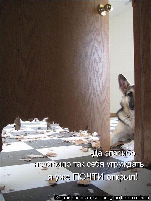 Котоматрица: -Да спасибо, не стоило так себя утруждать,  я уже ПОЧТИ открыл!
