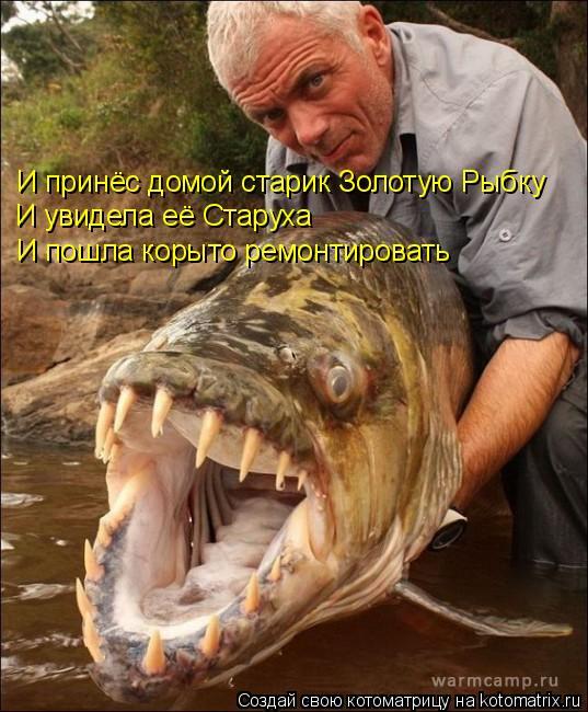 Тигровая рыба Голиаф.