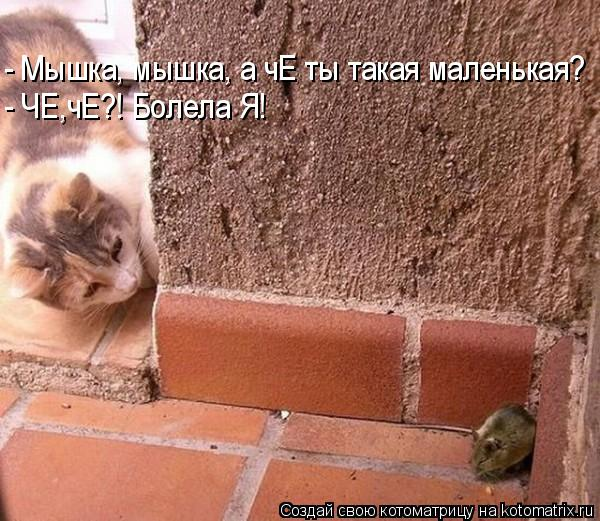 Котоматрица: - Мышка, мышка, а чЕ ты такая маленькая? - ЧЕ,чЕ?! Болела Я!