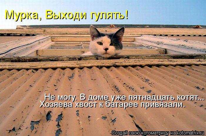 Котоматрица: Мурка, Выходи гулять! Не могу. В доме уже пятнадцать котят... Хозяева хвост к батарее привязали.