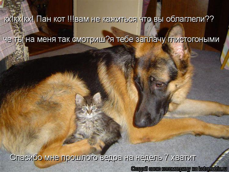 Котоматрица: кх!кх!кх! Пан кот !!!вам не кажиться что вы облаглели?? че ты на меня так смотриш?я тебе заплачу глистогоными Спасибо мне прошлого ведра на нед