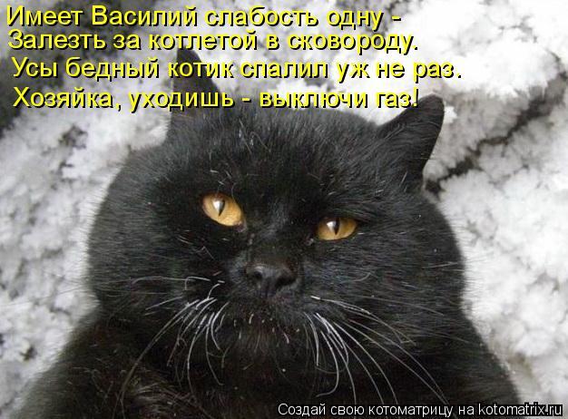 Котоматрица: Имеет Василий слабость одну - Залезть за котлетой в сковороду. Усы бедный котик спалил уж не раз. Хозяйка, уходишь - выключи газ!