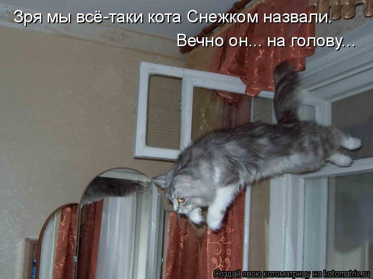 Котоматрица: Зря мы всё-таки кота Снежком назвали. Вечно он... на голову...