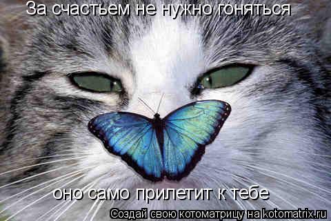 Котоматрица: За счастьем не нужно гоняться оно само прилетит к тебе