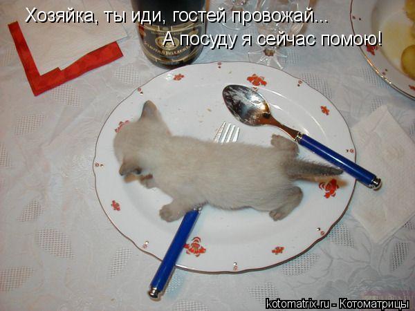 Котоматрица: Хозяйка, ты иди, гостей провожай... А посуду я сейчас помою!