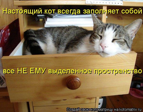 Котоматрица: Настоящий кот всегда заполняет собой все НЕ ЕМУ выделенное пространство
