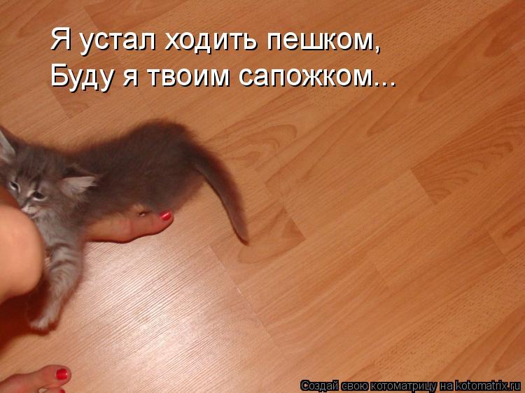 Котоматрица: Я устал ходить пешком, Буду я твоим сапожком...