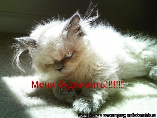 Котоматрица: Меня будиииить!!!!!!!