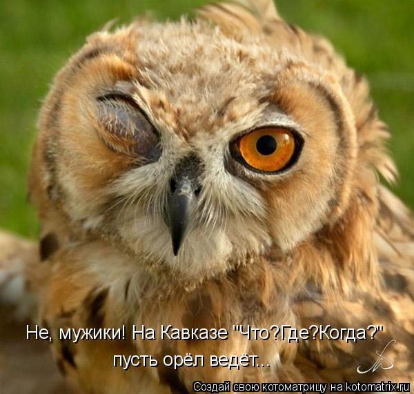 """Котоматрица: Не, мужики! На Кавказе """"Что?Где?Когда?"""" пусть орёл ведёт..."""