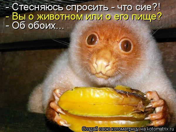 Котоматрица - - Стесняюсь спросить - что сие?! - Вы о животном или о его пище? - Об