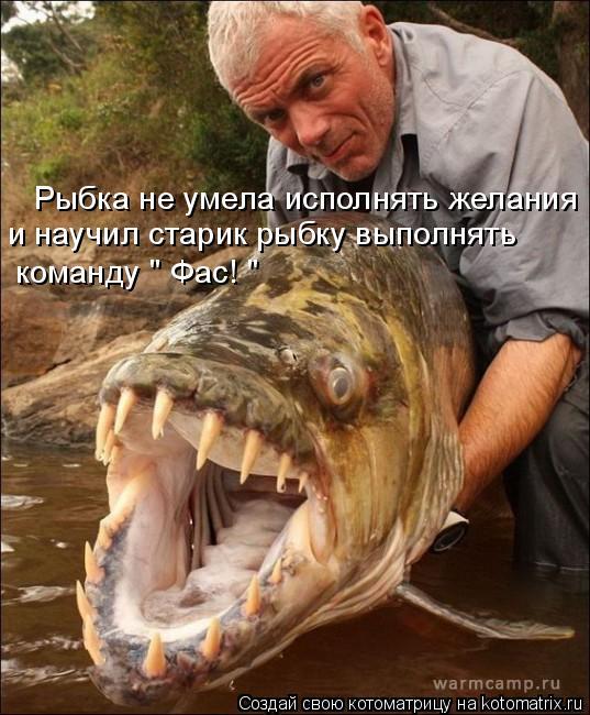 """Котоматрица: Рыбка не умела исполнять желания и научил старик рыбку выполнять команду """" Фас! """""""