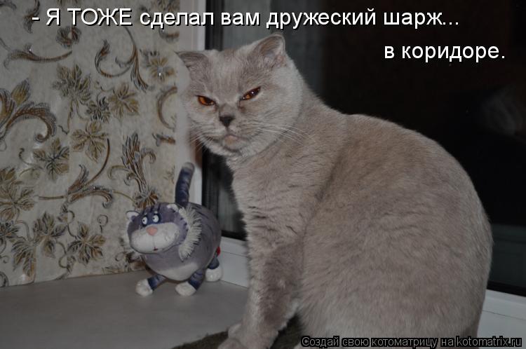Котоматриця!)))) - Страница 4 878626