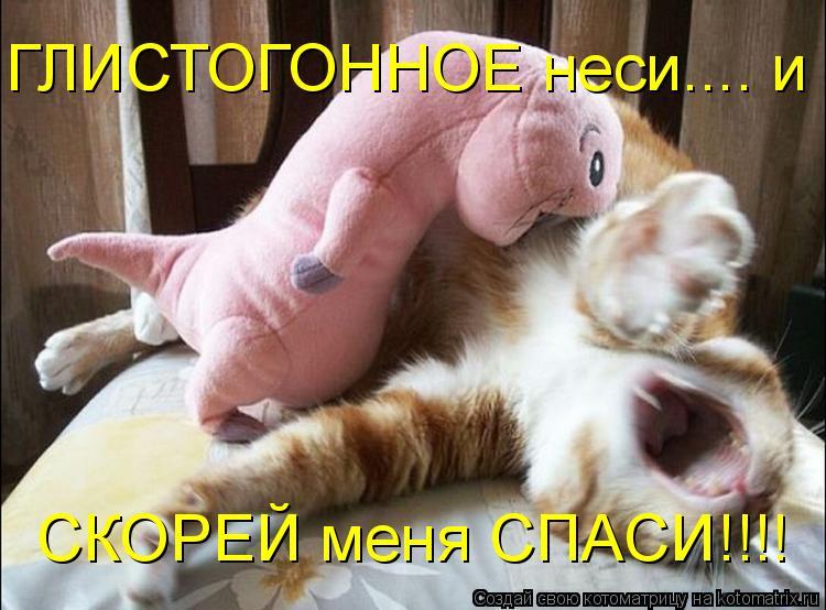 Котоматрица - ГЛИСТОГОННОЕ неси.... и  СКОРЕЙ меня СПАСИ!!!!