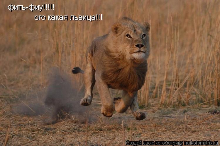 Котоматрица: фить-фиу!!!!! ого какая львица!!!