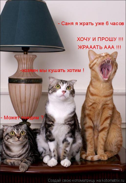 Котоматрица: - Может поедим ? -хозяин мы кушать хотим ! ХОЧУ И ПРОШУ !!! - Саня я жрать уже 6 часов ЖРАААТЬ ААА !!!
