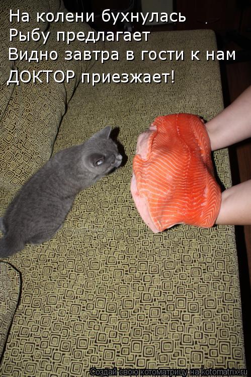 Котоматрица: На колени бухнулась Рыбу предлагает Видно завтра в гости к нам ДОКТОР приезжает!