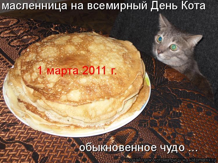 Котоматрица: масленница на всемирный День Кота обыкновенное чудо ... 1 марта 2011 г.