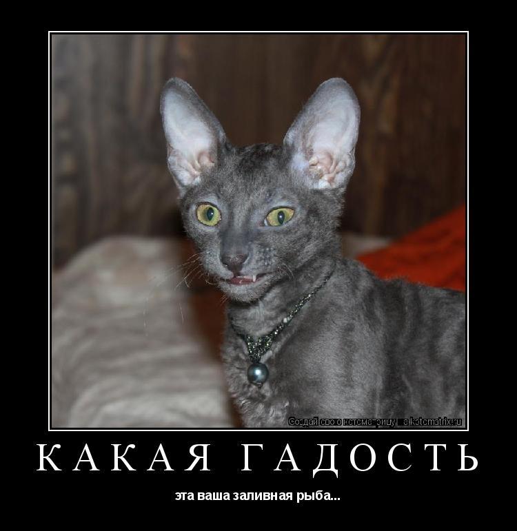 http://kotomatrix.ru/images/lolz/2011/04/08/9.jpg