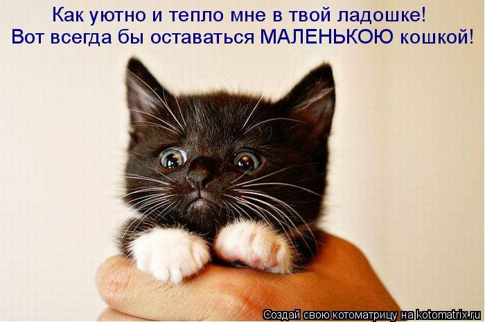 http://kotomatrix.ru/images/lolz/2011/04/09/879097.jpg