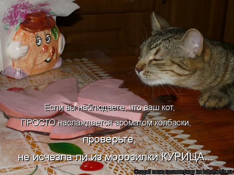 Котоматрица: Если вы наблюдаете, что ваш кот, ПРОСТО наслаждается ароматом колбаски,  проверьте,  не исчезла ли из морозилки КУРИЦА...