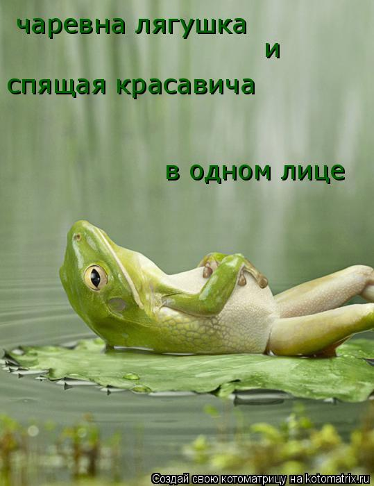 Котоматрица: чаревна лягушка и спящая красавича в одном лице