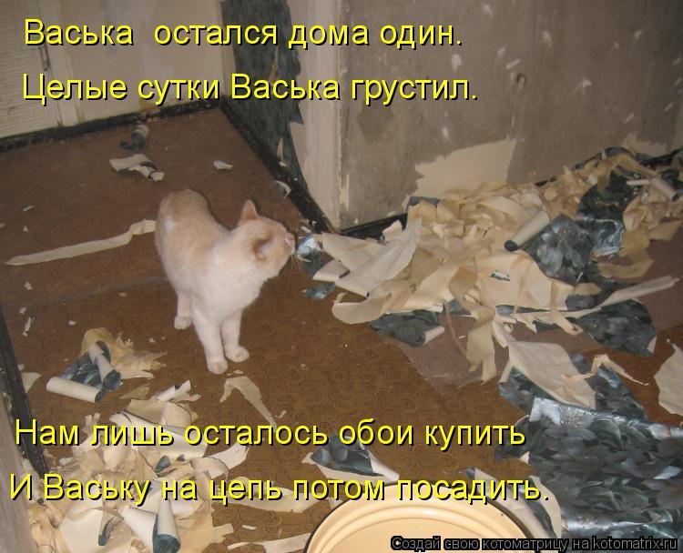 Котоматрица: Васька  остался дома один. Целые сутки Васька грустил. Нам лишь осталось обои купить И Ваську на цепь потом посадить.