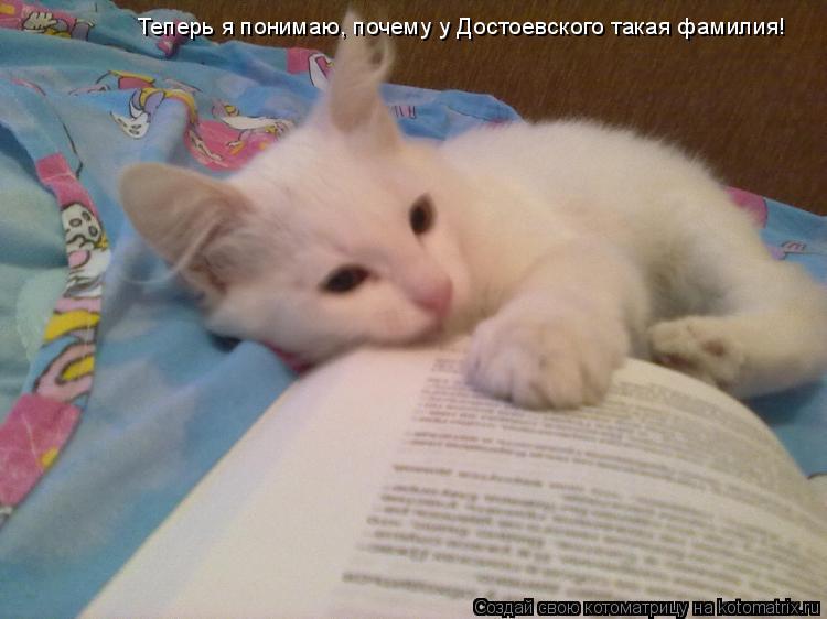 Котоматрица: Теперь я понимаю, почему у Достоевского такая фамилия!