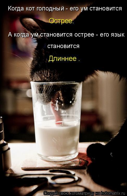Котоматриця!)))) 880416