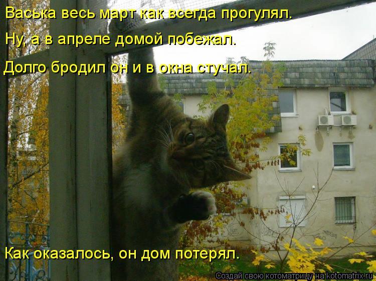 Котоматрица: Васька весь март как всегда прогулял. Ну, а в апреле домой побежал. Долго бродил он и в окна стучал. Как оказалось, он дом потерял.