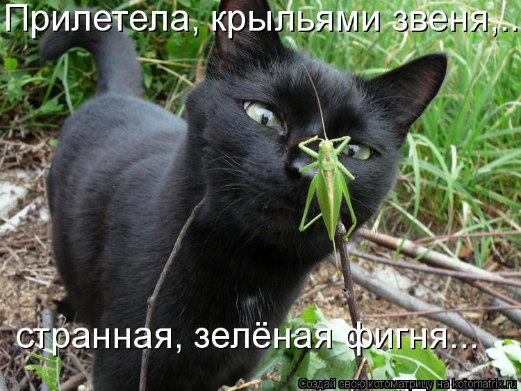 http://kotomatrix.ru/images/lolz/2011/04/10/880568.jpg