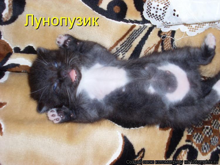 Кот мурчит на животе беременной 37