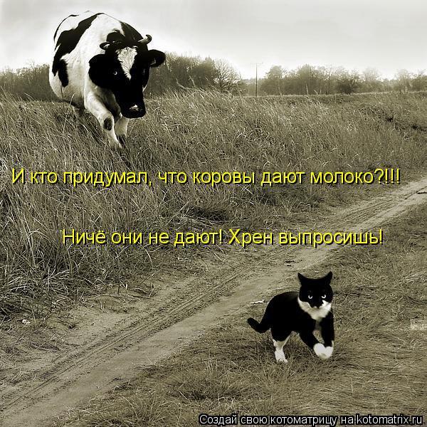 Котоматрица: И кто придумал, что коровы дают молоко?!!! Ничё они не дают! Хрен выпросишь!