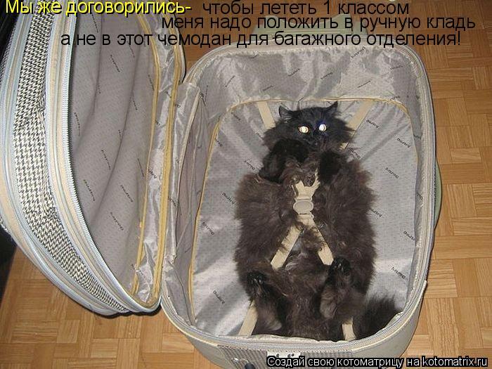 Котоматрица: чтобы лететь 1 классом меня надо положить в ручную кладь а не в этот чемодан для багажного отделения! Мы же договорились- Мы же договорились-