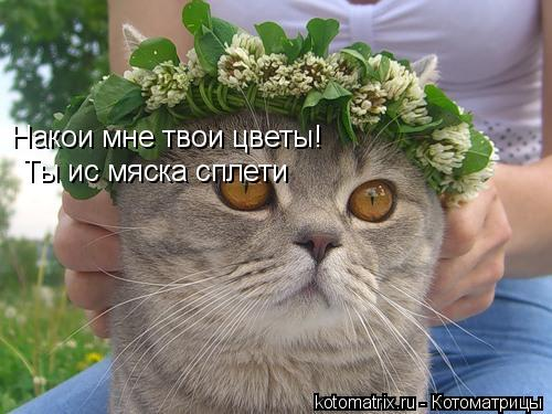 Котоматрица: Накои мне твои цветы! Ты ис мяска сплети