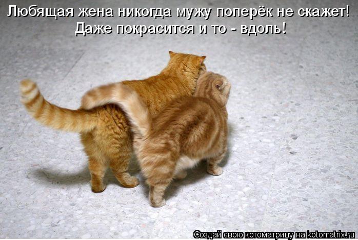 Котоматрица: Любящая жена никогда мужу поперёк не скажет!  Даже покрасится и то - вдоль!