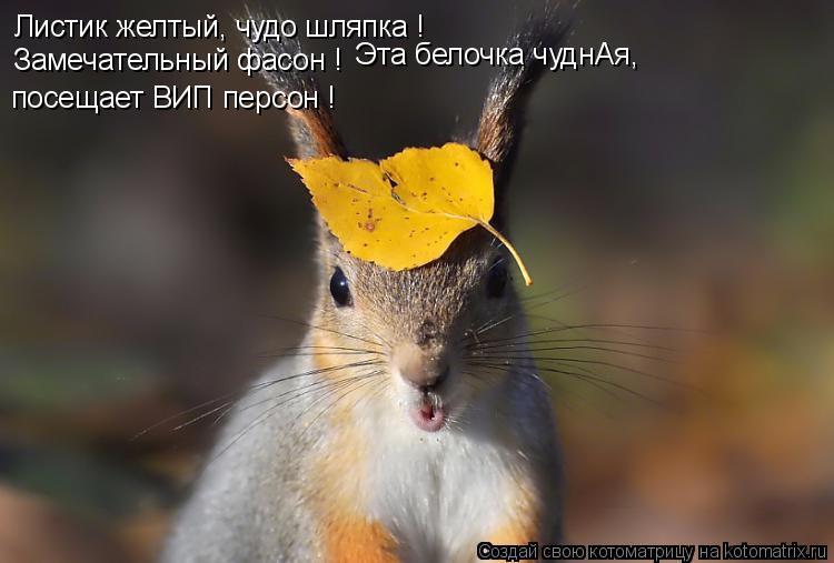 Котоматрица: Листик желтый, чудо шляпка ! Замечательный фасон ! Эта белочка чуднАя,  посещает ВИП персон !