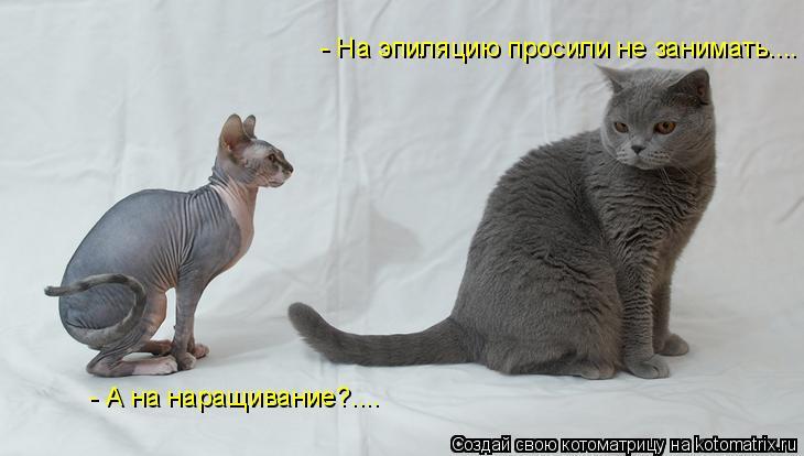 Прикольные фото с котами и другими животными.