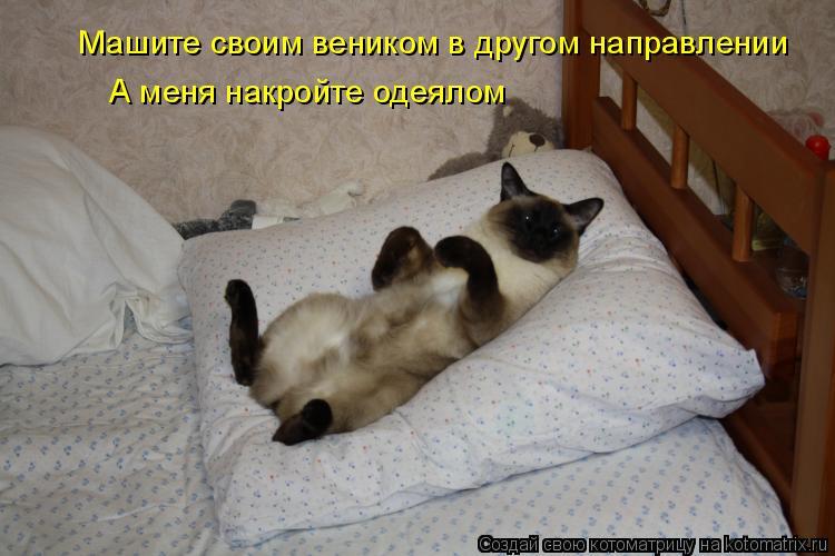 Котоматрица - Машите своим веником в другом направлении А меня накройте одеялом