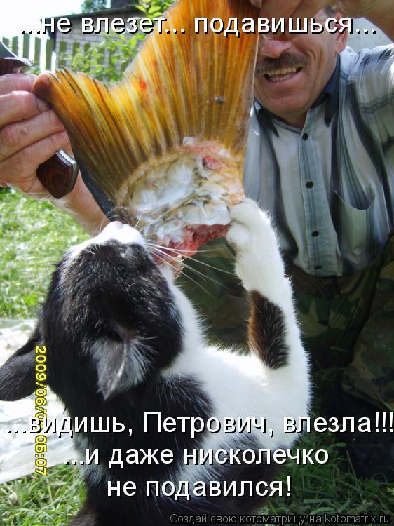 Котоматрица: ...не влезет... подавишься... ...видишь, Петрович, влезла!!! ...и даже нисколечко  не подавился!