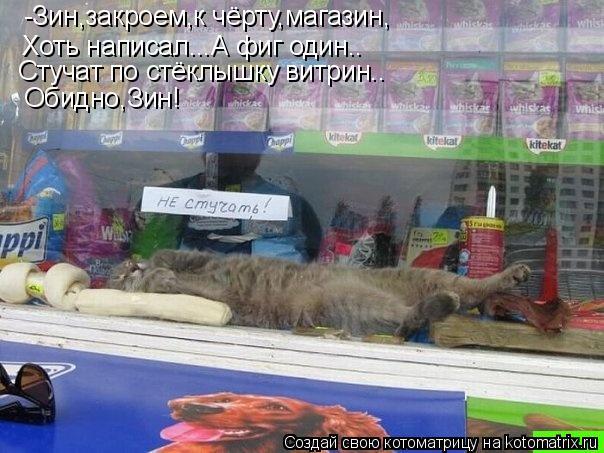Котоматрица: -Зин,закроем,к чёрту,магазин, Хоть написал...А фиг один.. Стучат по стёклышку витрин.. Обидно,Зин!