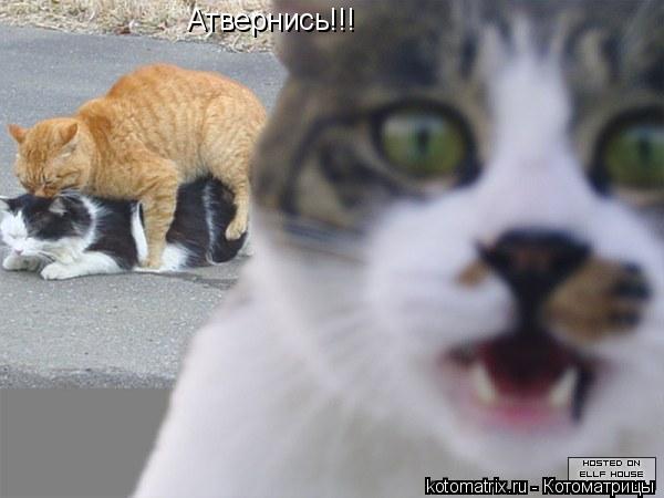 Котоматрица: Атвернись!!!