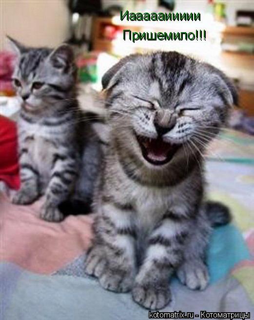 Котоматрица: Пришемило!!! Иаааааиииии