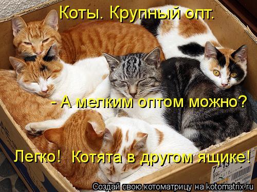 Котоматрица - - А мелким оптом можно? Легко! Котята в другом ящике! Коты. Крупный оп